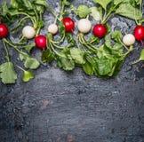 Los rábanos rojos y blancos con el tallo verde se van en el fondo rústico oscuro, visión superior Foto de archivo libre de regalías