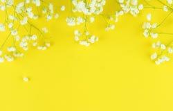 Los ramos de un gypsophila blanco florecen en un fondo amarillo Fotos de archivo
