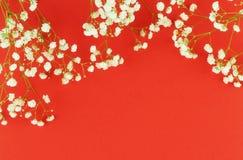Los ramos de un gypsophila blanco florecen en un fondo rojo Foto de archivo libre de regalías