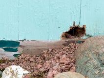 Los ratones caseros exteriores de la pared atesoran daño del parásito del roedor imagen de archivo libre de regalías