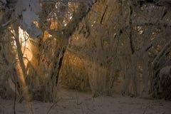 Los rayos de la luz muestran a través entre las ramificaciones cubiertas con sn Imagen de archivo libre de regalías