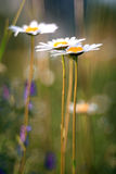 Los rayos de las ramas de los brotes de hoja del resplandor del sol saltan Fotos de archivo libres de regalías