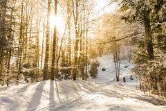 Los rayos de sol que se rompen a través de los árboles helados en un invierno se arrastran Imagenes de archivo