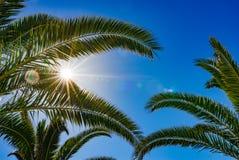 Los rayos de Sun brillan a través de las palmeras con el fondo del cielo azul imagenes de archivo