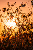 LOS RAYOS DE THE SUN A TRAVÉS de las RAMAS Imagenes de archivo
