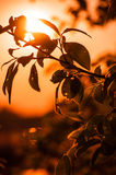 LOS RAYOS DE THE SUN A TRAVÉS de las RAMAS Imagen de archivo libre de regalías