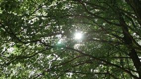 Los rayos del ` s del sol hacen su manera a través de las ramas de árboles almacen de metraje de vídeo