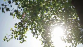 Los rayos del sol almacen de video