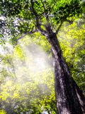 Los rayos del sol brillan fotos de archivo libres de regalías