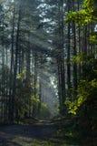 Los rayos del sol brillan a través de las ramas de árboles Carretera nacional en el bosque fotos de archivo libres de regalías