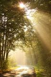 Los rayos del sol de la mañana caen en el camino forestal Fotografía de archivo