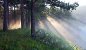 Los rayos del sol en la niebla Imagen de archivo