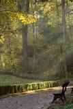 Los rayos del sol en parque del otoño Imagenes de archivo