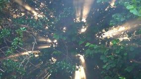 Los rayos del sol hacen su manera entre las ramas y las hojas de los árboles almacen de video