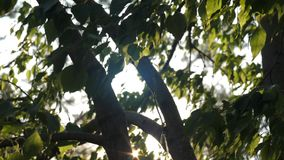 Los rayos del sol miran a escondidas hacia fuera de las ramas de árbol metrajes