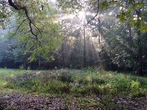 Los rayos del sol que brillan a través del toldo de árbol Fotos de archivo libres de regalías