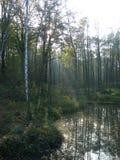 Los rayos del sol que penetra a través de las hojas de los árboles por la charca Imagenes de archivo