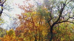 Los rayos del sol a través de las hojas de otoño
