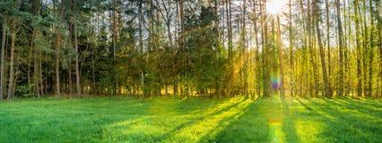 Los rayos hermosos del sol brillan a través de árboles con el prado verde enorme en el frente, opinión del panorama del fondo de  imagen de archivo libre de regalías