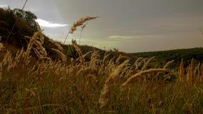los rayos pasados del tacto del sol poniente los puntos de la hierba fotografía de archivo