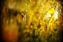 Los rayos perforan la hoja del árbol Fotos de archivo