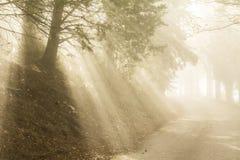 Los rayos solares filtran a través de la niebla y de los árboles en una carretera nacional imagenes de archivo