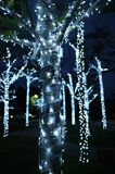 Los árboles adornados con la guirnalda se encienden durante la estación del saludo Foto de archivo