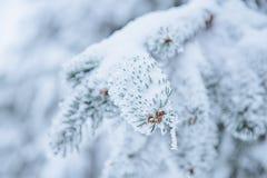 Los ?rboles cubiertos con el bosque de la nieve, del pino y las ramas cubiertos con la nieve, niebla con humo en las plantas del  foto de archivo libre de regalías