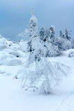 Los árboles cubiertos con nieve en una montaña rematan Fotografía de archivo libre de regalías