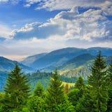 Los árboles de pino acercan al valle y al bosque del otoño Foto de archivo libre de regalías