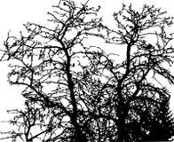 Los ?rboles del vector siluetean el fondo de la naturaleza fotografía de archivo libre de regalías