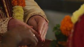 Los recienes casados de las demostraciones de la cámara vierten los pétalos de la flor en el cuenco