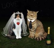 Los recienes casados del gato se sientan juntos foto de archivo