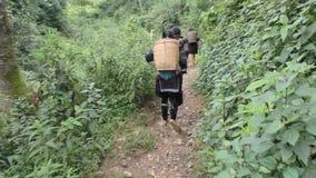Los recogedores del té caminan a la plantación de té en Vietnam almacen de metraje de vídeo