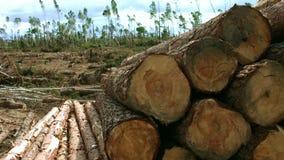 Los registros caidos mienten en el territorio de la registración Pila con los troncos cutted almacen de metraje de vídeo