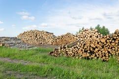 Los registros del abedul y del pino del combustible de la leña apilan el bosque Fotos de archivo libres de regalías