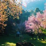 Los relojes de un perro en flor rosado de la flor cultivan un huerto Imagen de archivo