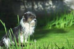 Los relojes del perro Fotos de archivo