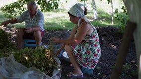 Los residentes del pueblo, el viejo hombre y la mujer recogen la cosecha del espárrago, sentándose debajo de un árbol metrajes