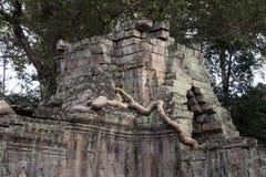 Los restos de la torre sobre la entrada del este con el árbol del spung arraigan en el templo del siglo XII de Preah Khan fotografía de archivo libre de regalías
