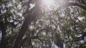 Los robles gigantes Myrtle Beach metrajes