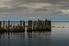 Los rompeolas en el mar Báltico Fotografía de archivo libre de regalías