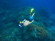 los roques游泳 男性废气管潜水到与海洋动植物的海底 库存图片