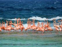 Los Roques, karibischer Strand: Flamingos auf dem Strand lizenzfreie stockfotografie