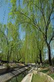 Los sauces verdes, el puente de m?rmol, y los r?os claros har?n un paisaje de la primavera en Pek?n, China imagen de archivo libre de regalías