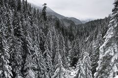 Los scapes escénicos hermosos de Vancouver y de Fraser Valley Scenic Backgrounds Imágenes de archivo libres de regalías