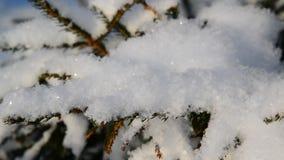 Los Schnee auf Baumasten stock video