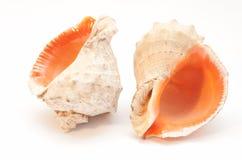 Los seashells Fotografía de archivo libre de regalías