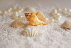 Los seashells y las perlas Imagen de archivo libre de regalías