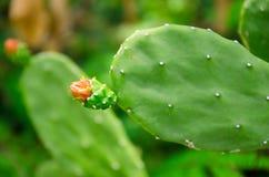 Los secretos y las ventajas del cactus Foto de archivo